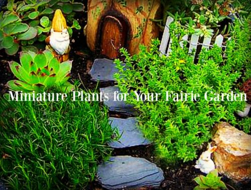 Try these miniature plants in your fairy garden|fairiehollow.com